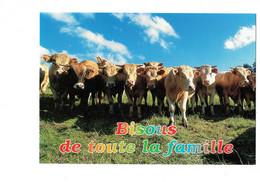 CPM - Francis Debaisieux H 075 - Troupeau De Vaches Au Pré - Vache - Les Humoristiques - Bisous De Toute La Famille - Cows