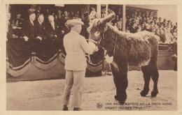 Ezel, Ane, Donkey / Une Belle Espèce De La Race Asine, Krijgt Hij Den Prijs --> Beschreven - Ezels