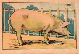 Image Série Animaux Domestiques - Le Porc - Andere