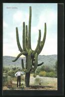 AK Giant Cactus, Mann Steht An Einem Grossen Kaktus - Unclassified