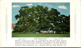 Louisiana Hahnville Southern Dairy Products Farms The President World's Largest Live Oak Tree - Other