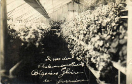 Carte Photo Begonias Gloire De Lorraine Dans Une Serre RV - Fotografia