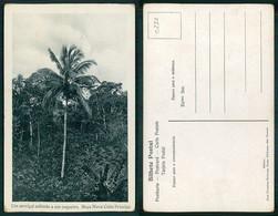 PORTUGAL - SÃO TOMÉ E PRÍNCIPE  [ 0238 ] - UM SERVIÇAL SUBINDO A UM COQUEIRO - Sao Tome And Principe