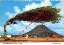 Hooiberg And Divi Sivi Tree - Aruba - Netherlands Antilles - Nederlandse Antillen - Aruba