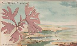 Fleur : Algues Marines : Numéro 6 :  Halyménia  Laciniata - Sin Clasificación