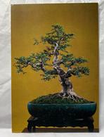 Tree, Bonsai Art Postcard - Trees