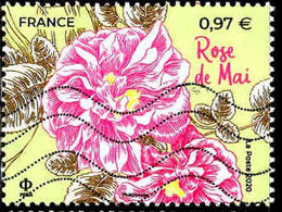 France Poste Obl Yv:5400A Mi:7608 Rose De Mai (Lign.Ondulées) - 2010-.. Matasellados