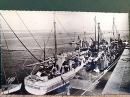 44 , Le Croisic  , Les Sardiniers Au Port En 1956 - Le Croisic