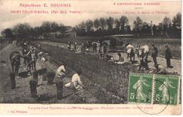 FR66 SAINT FELIU D'AVALL - Pépinière SOURNIA - Plantation - Attelages - Animée - Rare - Belle - Other Municipalities