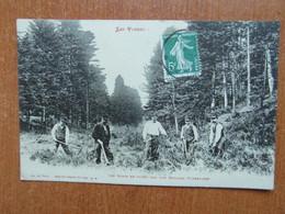 SAINT-DIE  Les Semis En Foret Par Une Brigade Forestière   Animée   88 Vosges - Saint Die
