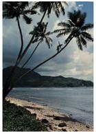 (MM 25) American Samoa - Native Up A Coconut Tree (not A Common Sight...) - American Samoa
