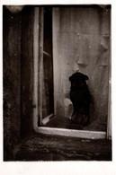 Photo Originale Animaux - Petit Chien Faisant Le Beau à La Fenêtre Vers 1930 Sur Tirage Sombre - Non Classificati