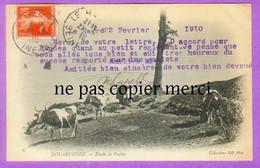 DOUARNENEZ - RARE - études De Vaches - Douarnenez