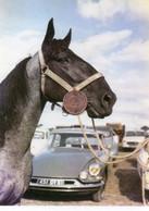 Photographie Originale Grand Format. .Automobile Citroën DS Et Cheval.. - Automobili