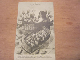 Carte Postale  Les Fruits La Fraise Des Bois - Altri