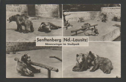 (541) SENFTENBERG : BARENZWINGER IM STADTPARK - Orsi