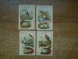 Assez Rare Série De 4 Images Pub Du Cacao Poulain , Série Oeufs Et Nids - Poulain