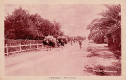 FEDALAH,  FEDHALA Ou FEDALA (Mohammédia - Maroc) - Une Avenue - Cpa Rare Avec Convoi De Fourrage -  TBE - Otros