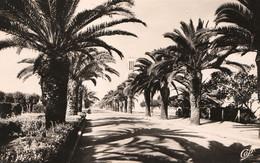 FEDALAH,  FEDHALA Ou FEDALA (Mohammédia - Maroc) - Avenue Charles De Gaulle - Cpsm Rare - Bon état - 2 Scans - Otros