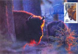 Carte Postale 1er Jour, UNESCO, Forêt Bialowieza, 2005 (YT S 132) - Unclassified