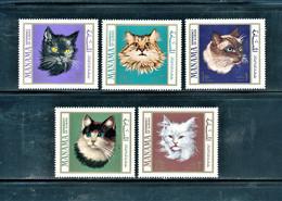 Ajman ,Cats , 1968 , 5 Stamps - Domestic Cats