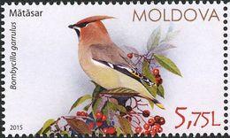 Moldavie. Moldova.  Jaseur Boréal. Waxwing - Sperlingsvögel & Singvögel