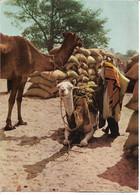 NIGER - ZINDER - Marché - Traite Des Arachides - - Niger