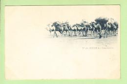 ALGERIE - BISKRA - Caravane De Chameaux - Beau Plan - Photo Arnold VOLLENWEIDER N° 18 - Dos Simple - 2 Scans - Biskra
