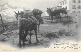 Suisse Valais (Wallis) - Zermatt Beladene Maulesel (Mules Chargées) 1902-09-15 Animée TB - VS Valais
