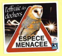 AUTOCOLLANT L'EFFRAIE DES CLOCHERS - ESPÈCE MENACÉE - LPO LIGUE POUR LA PROTECTION DES OISEAUX - CHOUETTE EFFRAIE - Stickers