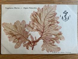 Algues Marines - Végétation Marine (Ed. Ar. Chénier, Cherbourg) - Otros