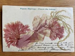 Algues Marines - Fleurs Des Grêves (used, 1906) - Otros