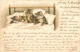 Chats Humanisés - Cats - Chats Couchés Dans Le Lit - Animaux Chat - Cpa Illustrateur - Cats