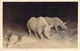 Carte Photo Rhinocéros De Nuit Photocard Martin Johnson Flashlight Of 2 Rhinos - Rhinoceros