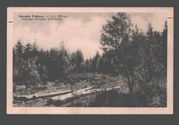 Baraque Fraiture - Paysage Forestier D'Ardenne - Vielsalm