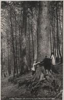 Harz - Dicke Tannen - Ca. 1955 - Unclassified