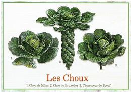 Les Choux - éditions Mirontaine - Neuve - Recipes (cooking)