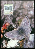 Mk Greenland Maximum Card 1997 MiNr 303 Y (fl) | Butterflies. Arctic Blue - Maximum Cards