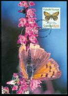 Mk Greenland Maximum Card 1997 MiNr 304 Y (fl) | Butterflies. Small Copper - Maximum Cards
