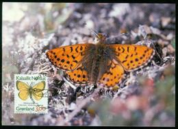 Mk Greenland Maximum Card 1997 MiNr 302 Y (fl) | Butterflies. Northern Clouded Yellow - Maximum Cards