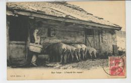 SUISSE - BERN - Sur L'Alpe - L'Heure Du Repas (cochons ) - Carte Postée à ZERMATT - BE Berne