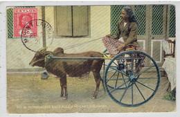 CEYLON - SRI LANKA - Singhalese Race Bull And Cart - Colombo 1921 - Sri Lanka (Ceylon)