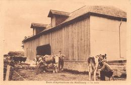 LE NEUBOURG - Ecole Pratique D'agriculture - La Traite - Le Neubourg