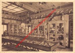 Musée Des Missions De Scheut - China - Anderlecht - Anderlecht