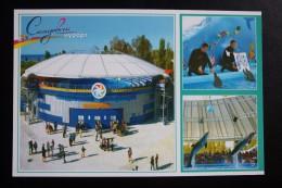 Ukraine. Skadovsk. Dolphins / Dolphin  - Modern Postcard - Delfini