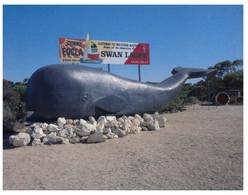 (NN 5) Australia - WA - Eucla - Amber Motor Hotel - The Whale - Hotels & Restaurants