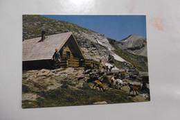 D 73 - Haute Maurienne - Parc De La Vanoise - Le Refuge De La Dent Parrachée - Chèvre - Altri Comuni
