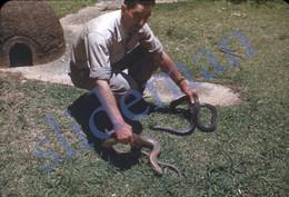 3 SLIDES 1949 COBRA SNAKE SERPENT ZOO SP BRASIL BRAZIL AMERICA 35mm PHOTO FOTO N5 - Diapositives (slides)