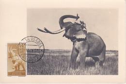 POSTAL DE FERNANDO POO DE UN ELEFANTE (ELEPHANT) DEL AÑO 1958 - (GUINEA ESPAÑOLA) - Equatorial Guinea