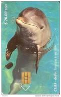 103 TARJETA DE CUBA DE UN DELFIN  (DOLPHIN) - Dolphins